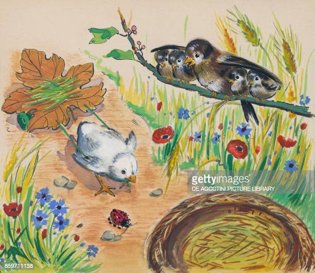 Birds watching a chick from a branch children's illustration drawing