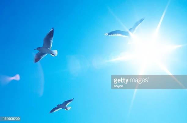 Oiseaux avec le soleil derrière