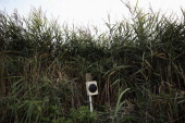 Birdsong is played over a speaker system to attract migrating birds on a private reserve in East Sussex on August 21 2013 in Rye United Kingdom The...