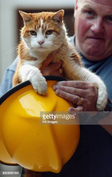 Birkenhead firefighter Pete Dowling with station cat Angus who has split the staff with a decision as to whether he should stay or go The ginger...