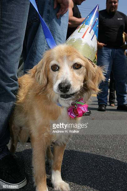 A birthday dog attends the North Shore Animal League celebration for 'DOGust The First' a universal birthday for rescued dogs everywhere on August 1...