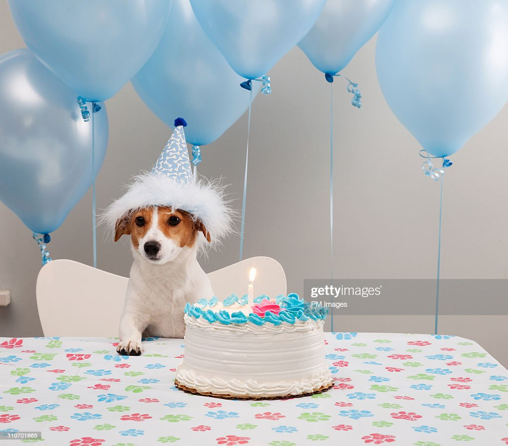 Birthday Dog : Stock Photo