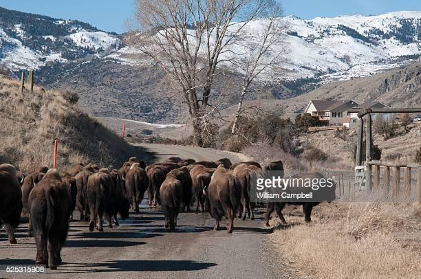 Swingers in bridger mt Bridger, Montana swingers, Bridger swingers lifestyle at
