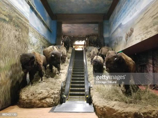 A bisonflanked escalator takes visitors into the Wonders of Wildlife