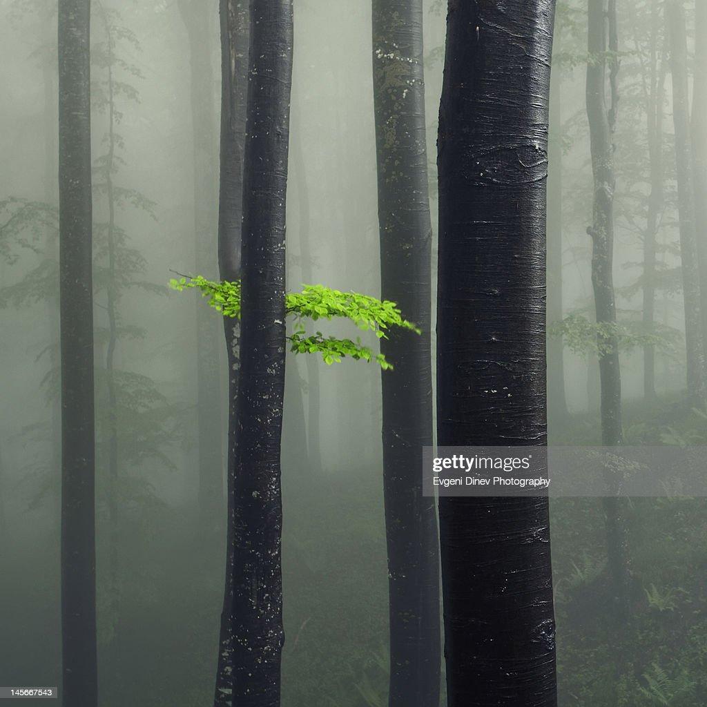 Bit of Green : Stock Photo
