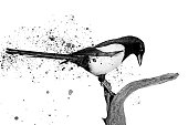black and white bird and spray paint , birds, wildlife, animals
