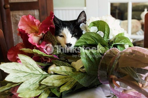 Black And White Cat In Turnedover Vase Of Pink Flowers Stock Photo