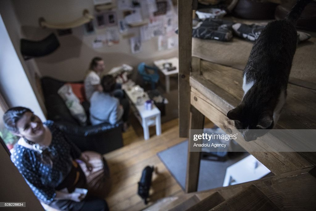 A black and white cat is seen at the Cat Caffee, Krowoderska 48, Krakow, Poland on May 4, 2016. The Cat Coffee is an attraction for the cat lovers and it is open since the end of June 2015 and has six cats. Two of the cats came from the ' Kocia Academia' fondation and the other four cats were or found on the street.