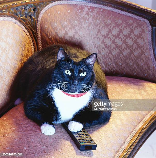 Lazy Cat Stock Photos And Pictures Getty Images