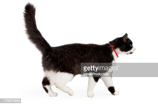 ブラックとホワイトの猫