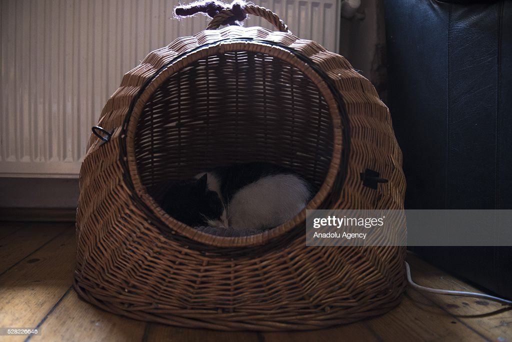 A black and white cat sleeps in the basket at the Cat Caffee, Krowoderska 48, Krakow, Poland on May 4, 2016. The Cat Coffee is an attraction for the cat lovers and it is open since the end of June 2015 and has six cats. Two of the cats came from the ' Kocia Academia' fondation and the other four cats were or found on the street.