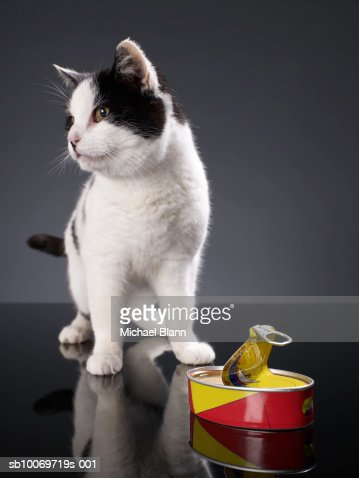 Black and white cat standing next to an open can of sardines, looking away : Stock Photo