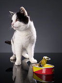 Black and white cat standing next to an open can of sardines, looking away