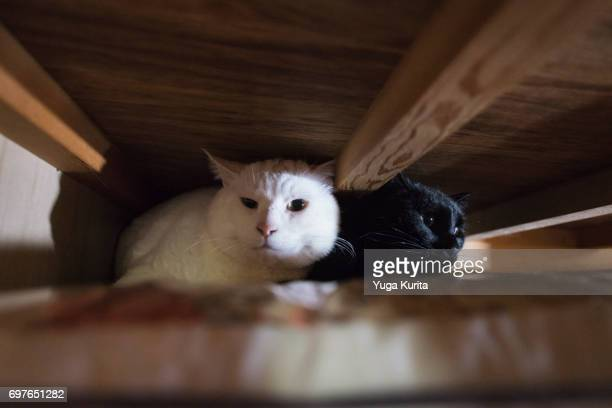 Black and White Cats in a Closet