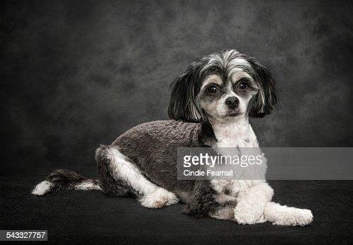 Dog Grooming Owen Sound