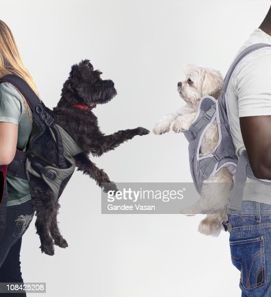 Black and White dogs connecting : Stock Photo