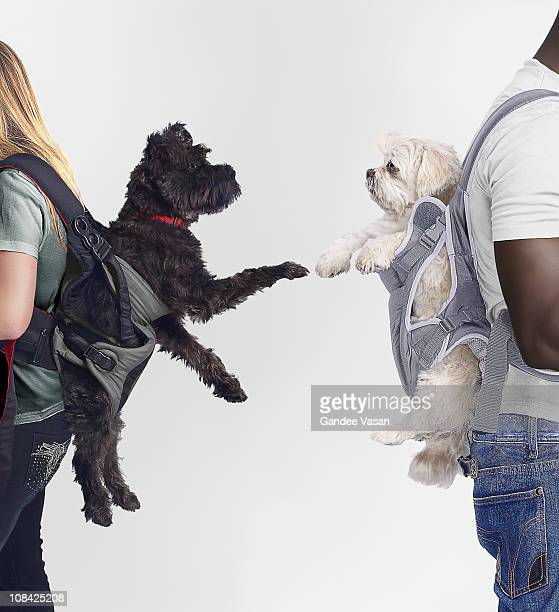 Black and White dogs connecting