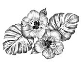 Black and white digital hand drawing Hibiscus flowers with monstera leaves isolated on white background for graphic use