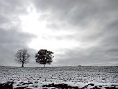 Black and white image of frost covered meadow in winter