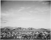 A black and white landscape photograph from Death Valley National Park the flat ground leading to the mountains in the distance is covered by small...
