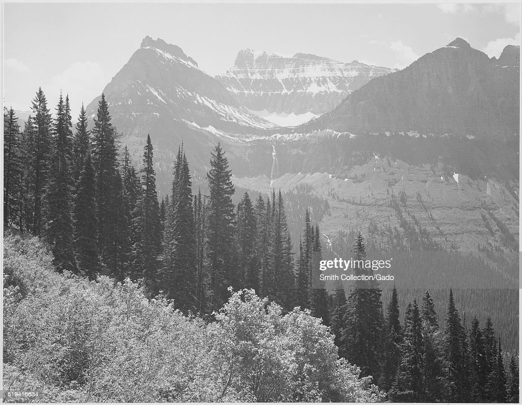 A black and white photograph of mountain tops covered with bands of snow in Glacier National Park the foreground consists of trees and bushes the...