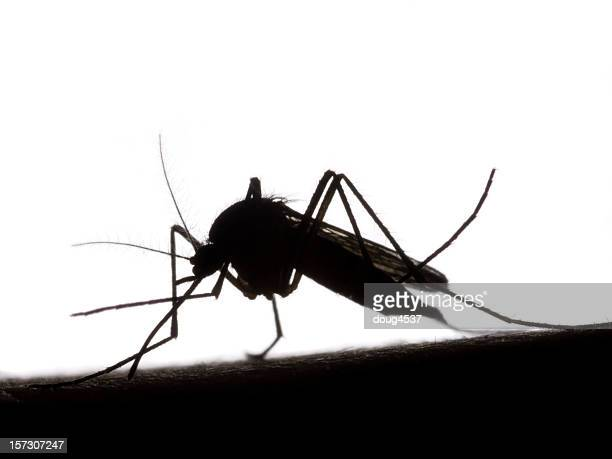 Black and white silhouette of mosquito