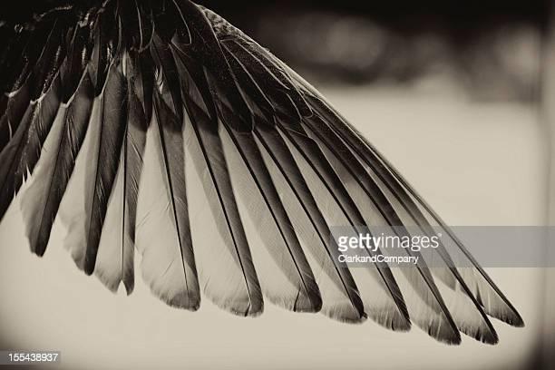 Tons noir et blanc, oiseau aile.