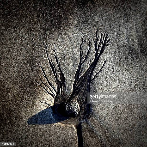 Black beach and a stone