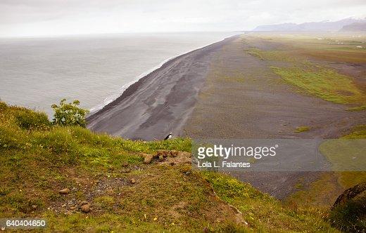 Black beach of Dyrhólaey : Foto de stock