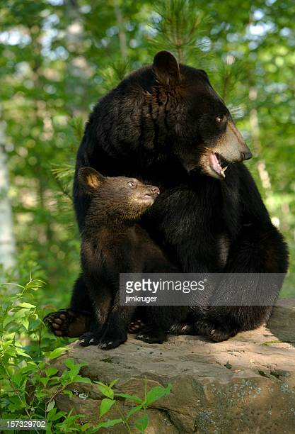 Black bear and cub in spring woods.