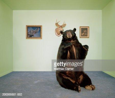 Black bear sitting up on rug in living room