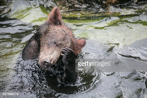 Black Bears Take a Shower in a River