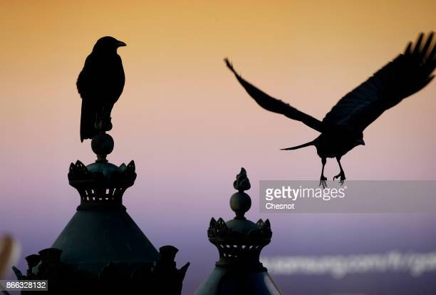 Black birds are seen in front of a giant advertisement for the new Samsung Galaxy Note 8 phone is displayed on 'Place de la Concorde' on October 25...