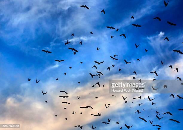 Black Birds Blue Sky