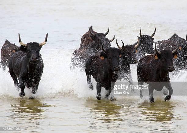 Black Bulls racing