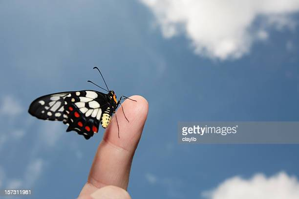 A black butterfly posing on an index finger