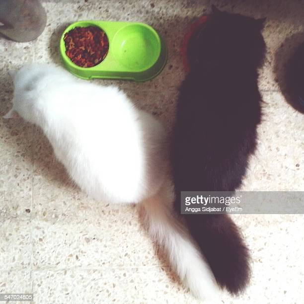 Black Cat And White Cat Eating