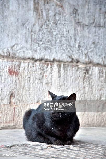 Black cat at Ningjiang Jiangsu province China