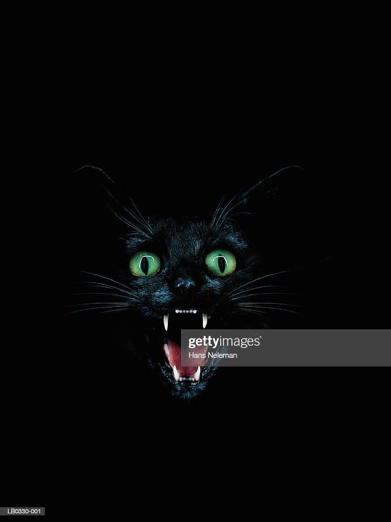 Black cat baring fangs