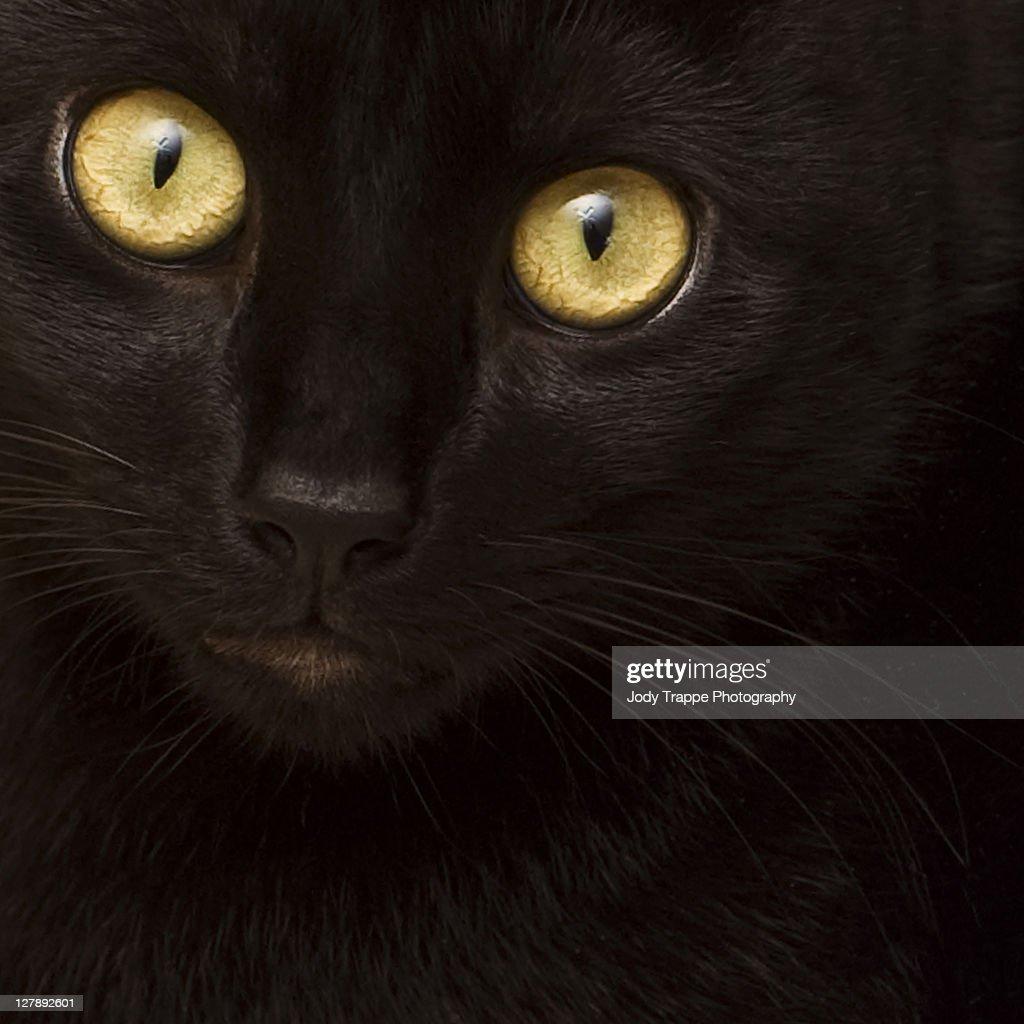 Black cat eyes : Stock Photo