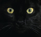 Black Cat Eyes