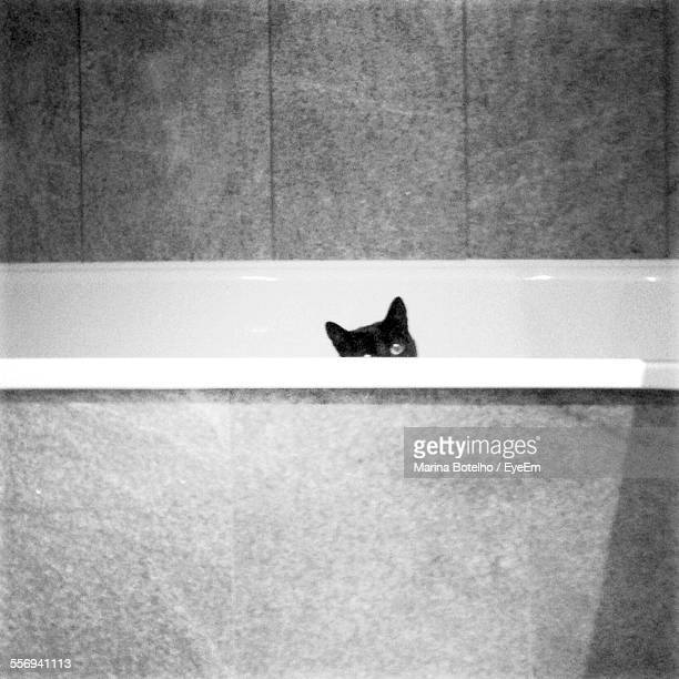 Black Cat Hiding In Bathtub