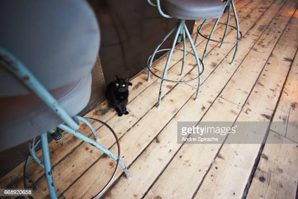 Black cat in a bar