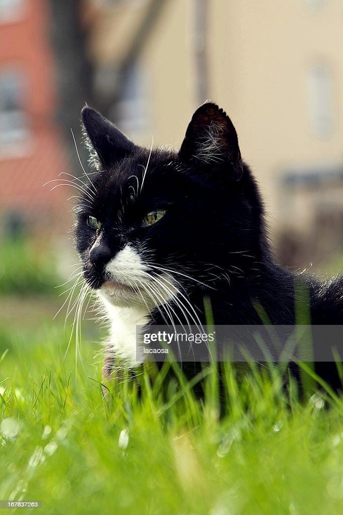 black cat in green gras : Stock Photo