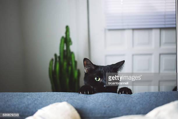 Black cat in living room peeking over arm rest of sofa