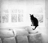 Black Cat in Sunshine