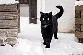 Black cat in the snow outdoor