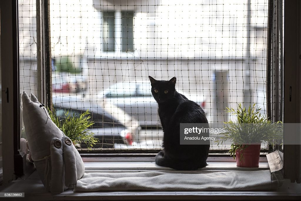 A black cat is seen at the Cat Caffee window, Krowoderska 48, Krakow, Poland on May 4, 2016. The Cat Coffee is an attraction for the cat lovers and it is open since the end of June 2015 and has six cats. Two of the cats came from the ' Kocia Academia' fondation and the other four cats were or found on the street.