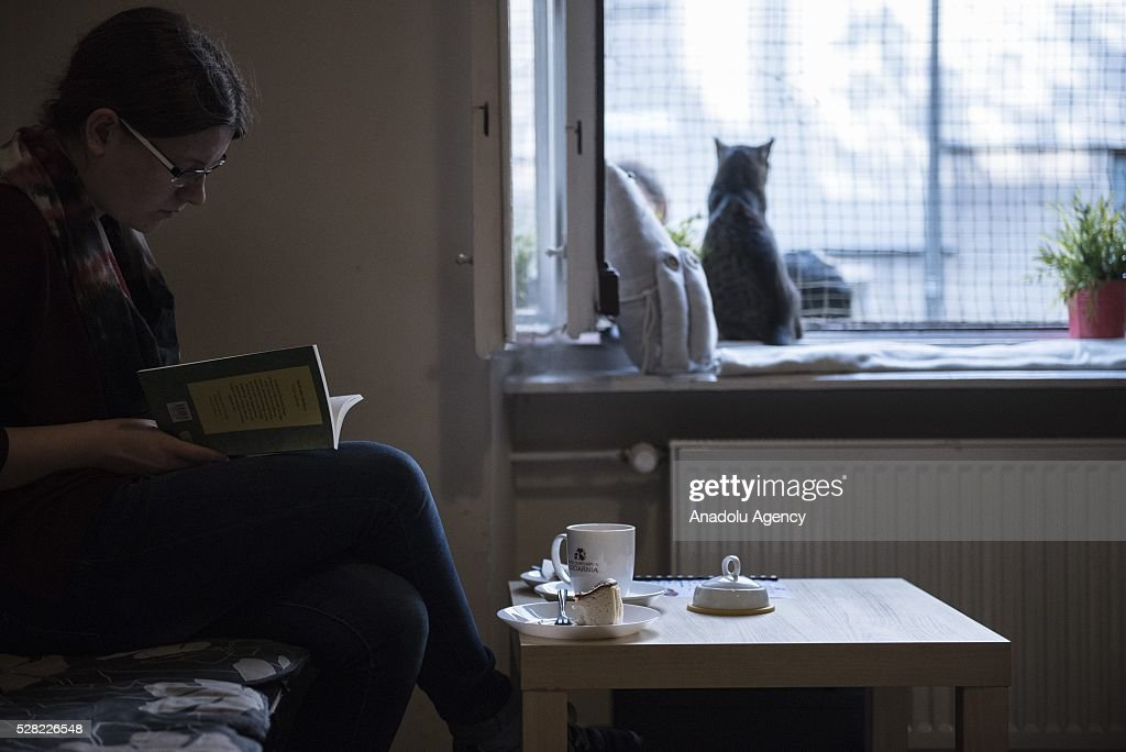 A black cat is seen next to the cafe client at the Cat Caffee, Krowoderska 48, Krakow, Poland on May 4, 2016. The Cat Coffee is an attraction for the cat lovers and it is open since the end of June 2015 and has six cats. Two of the cats came from the ' Kocia Academia' fondation and the other four cats were or found on the street.