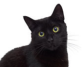 Black cat isolated on white sitting and looking at you
